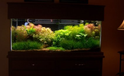 Planted Aquarium Maintenance